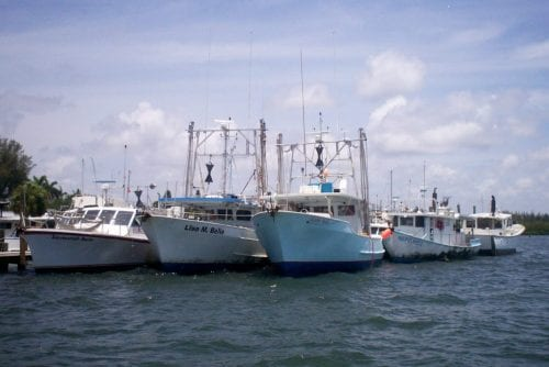 Cortez fleet at A.P. Bell Fish Co.