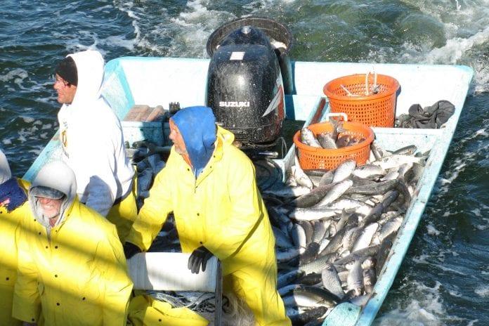 Cortez mullet boat