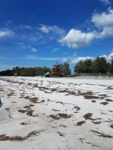Seaweed at Coquina Beach