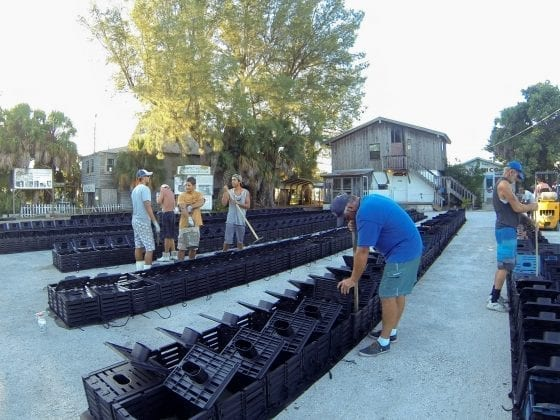 Cortez crab traps - Cindy Lane | Sun