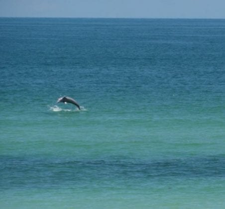 Dolphin joy