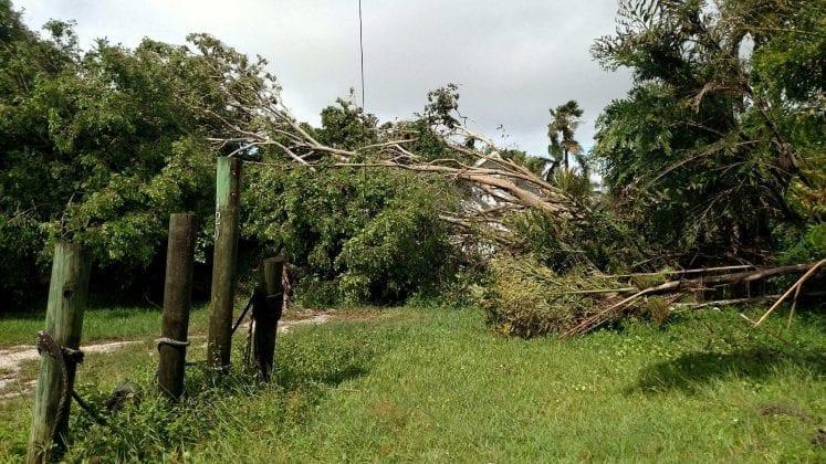 Cortez post-Irma