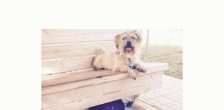 dog park funding