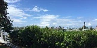 Holmes Beach mangroves