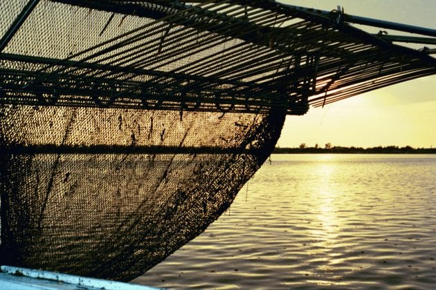 Cortez shrimp net - Cindy Lane | Sun