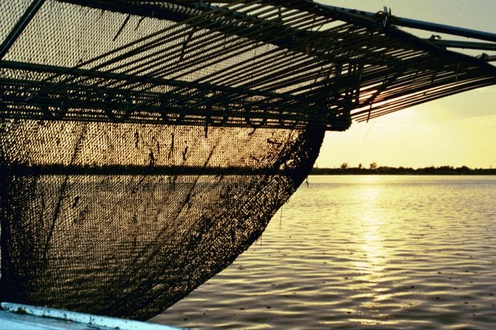 Cortez shrimp net - Cindy Lane | Sun