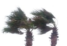 Storm palms