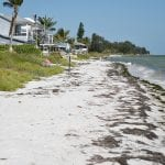 mean high water line Anna Maria