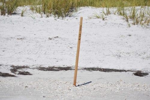 Anna Maria Beach Survey Stake II