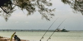 LifeLines: Fishing facts