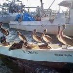 LifeLines: Fishing tackle