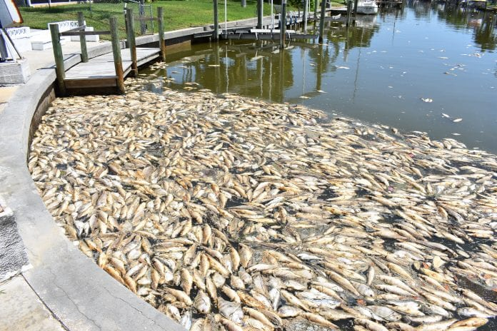 red tide canal cleanup