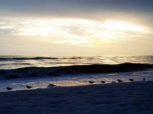 Birds Are Back On The Beach Tonight Anna Maria Island Cindy Lane Sun