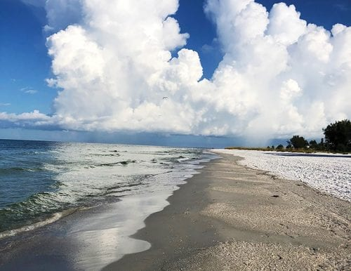 red tide recovery clean beach