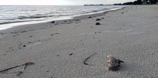 Red tide fish kill