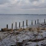 Anna Maria Pier RFP seagulls