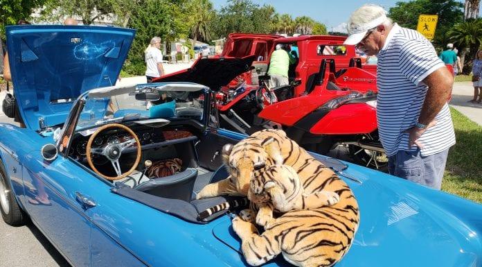 Bayfest 1024 tiger