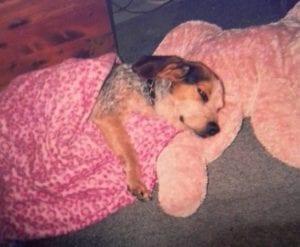 BB Buddy cuddled up