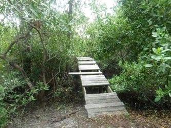 FISH Preserve bridge