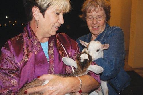 bethlehem walk holding goats