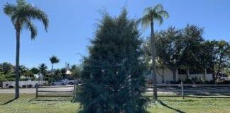 Holmes Beach Christmas tree