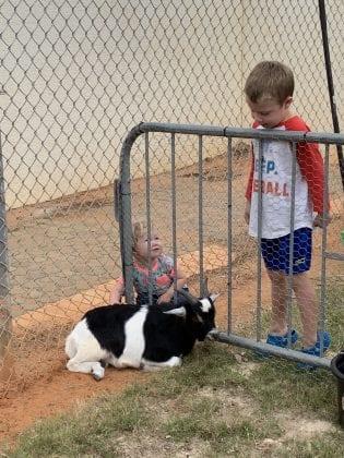 lester day goat