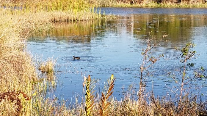 County addresses duck hunting complaints