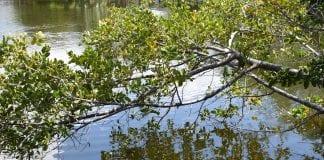 Aeration plans take shape for Spring Lake
