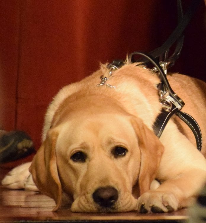 Southeastern Guide Dogs Issac