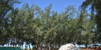Proposed tree removals delayed