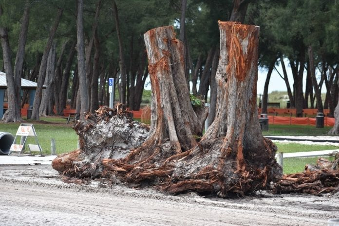 County commission approves Coquina Beach tree removals