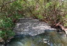 Algae causes fish kill in Manatee River