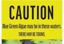 Blue-green algae warning signs coming