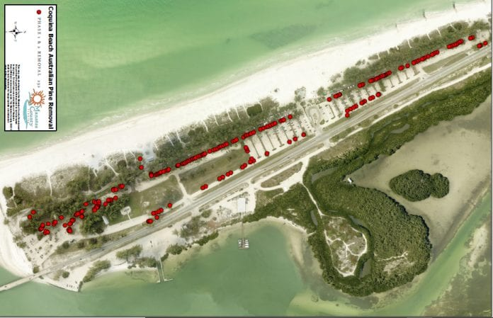 County submits Coquina Beach tree replacement plan