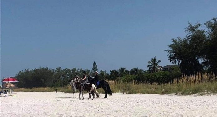 Horses not allowed on Gulf beaches