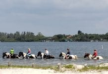 Concerns raised over horse waste in bay