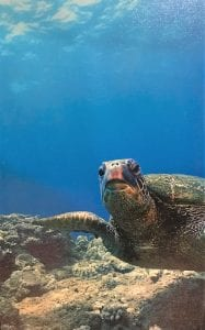Live auction to benefit Turtle Watch