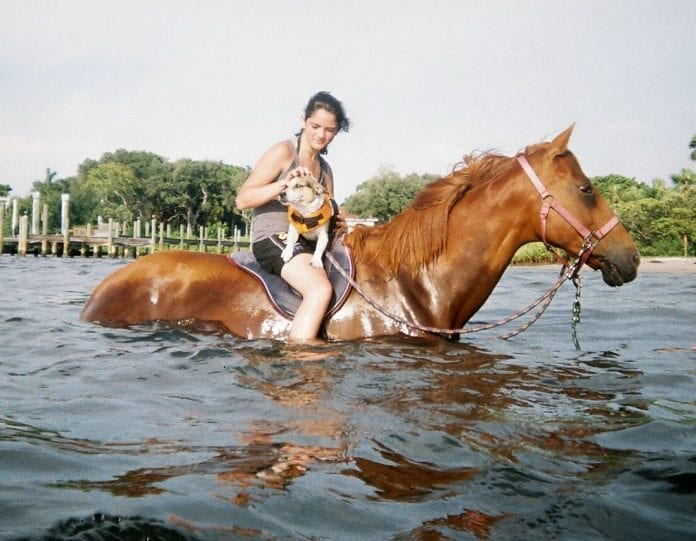 Pinellas County bans water horses