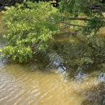Officials hope for Spring Lake recovery