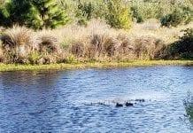 Hunters sound off on duck season