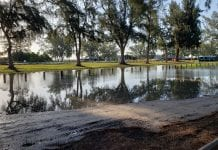 Pines plague parking project